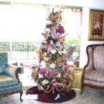2010 Royal Victorian 6ft Tree